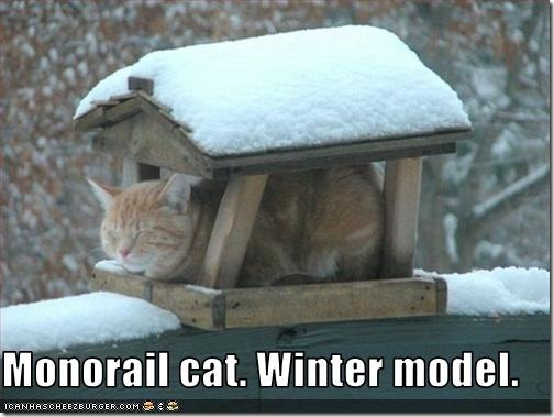 funny-pictures-monorail-cat-has-winter-model